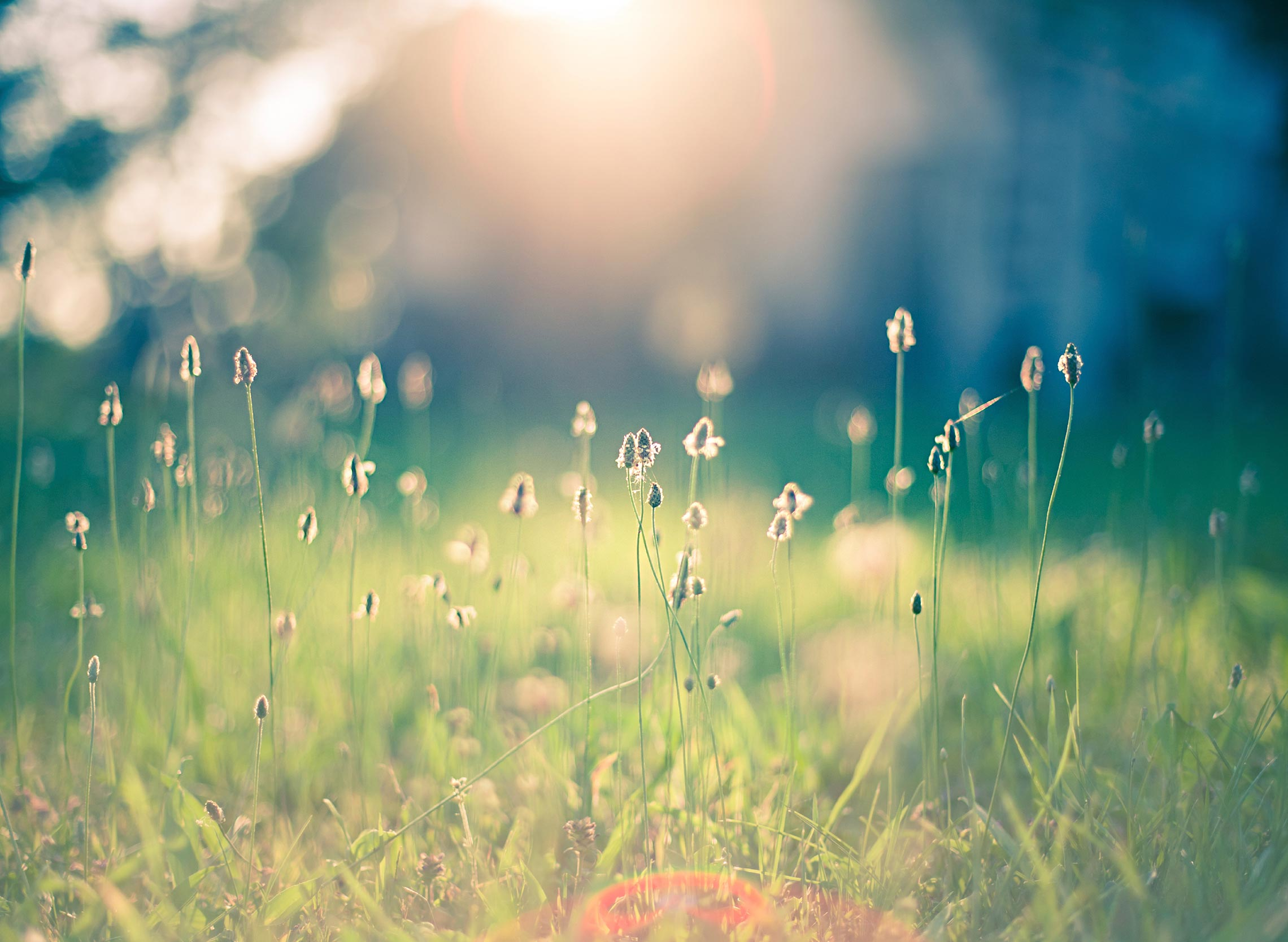 http://cdn2.editmysite.com/images/editor/theme-background/stock/Meadow-Morning.jpg